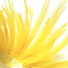 Bright Yellow Full Hackle Feathers